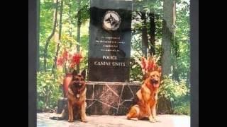 Собаки которые погибли(, 2012-11-25T17:27:55.000Z)