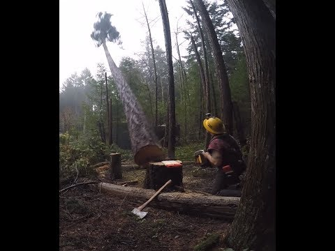 CUTTING TREES DOWN AND LAUNCHING WEBSITES PART ,2