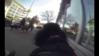 A Dog's Eye View of DC: 14th Street