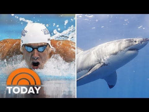 Michael Phelps vs. Shark: Who Will Win The Race? | TODAY