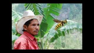 The biggest insect in the world?