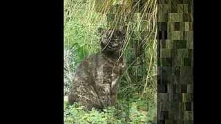 Dunja Knebl PICEK MOJ pet cat CAPICA