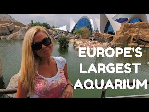 Europe's Largest Aquarium - Oceanografic, Valencia