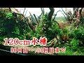 No 026 120cm水槽 80 130日目まで mp3
