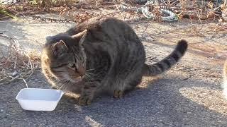 林崎漁港地域猫2018 1 13a thumbnail
