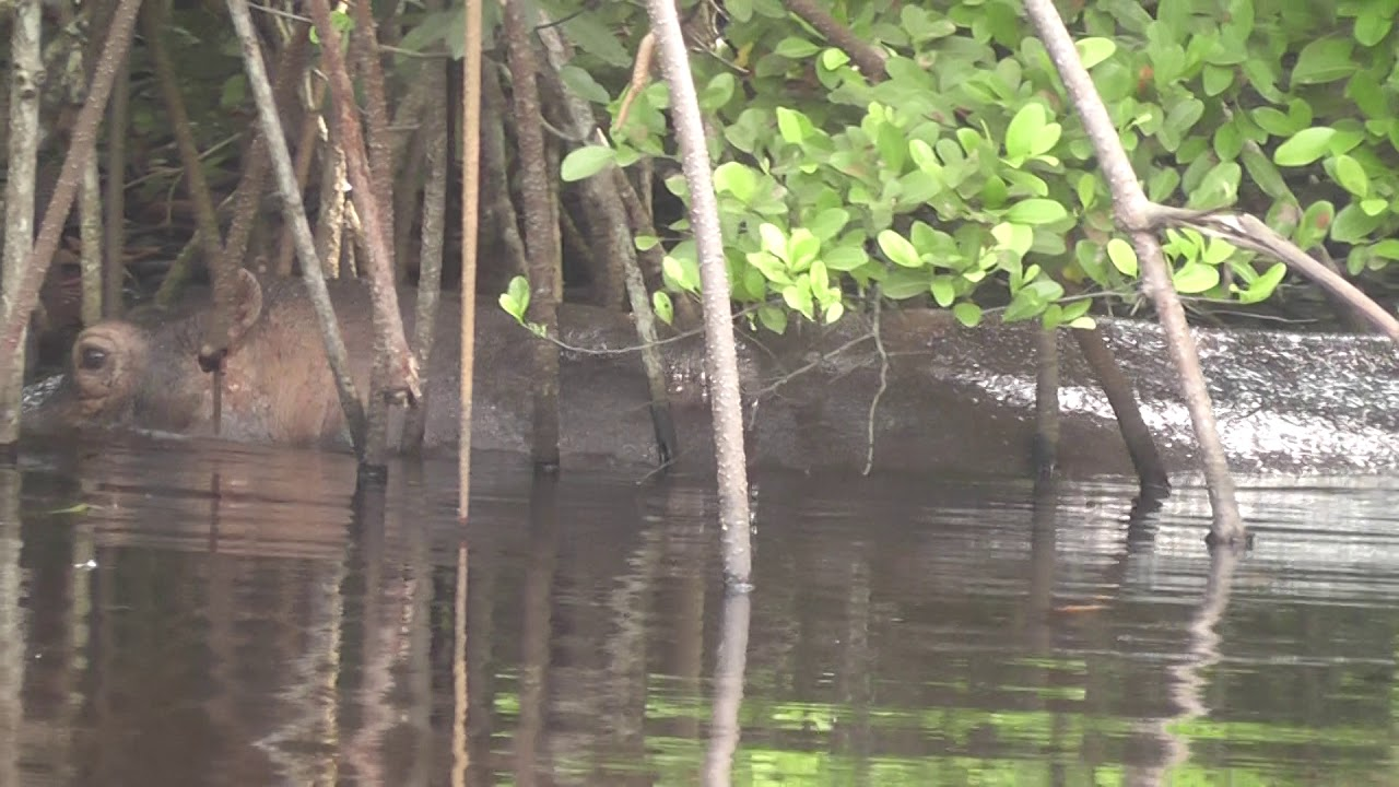 Loango National park Gabon