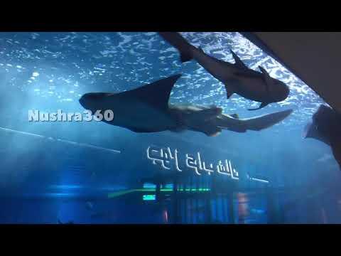 Dubai Mall Aquarium  Dubai Mall Underwater zoo  Nushra360