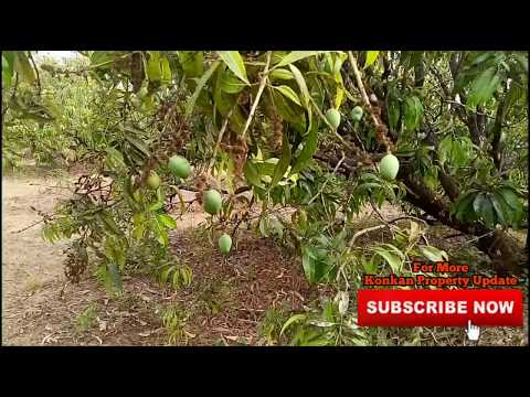 (Property Sold) #Mango Farm for Sale in Asge Village, Tal Lanja, Dist Ratnagiri. Konkan