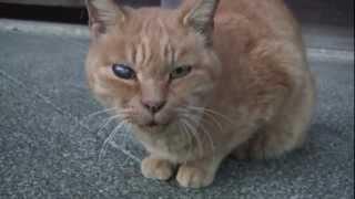 関口芭蕉庵を縄張りにしている野良猫