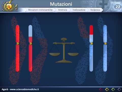 Genetica 02 - Mutazioni