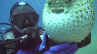 Борис и Рыба шар.mp4