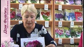 ДФ. О.Кособокова о своих сортах фиалок (КО-)