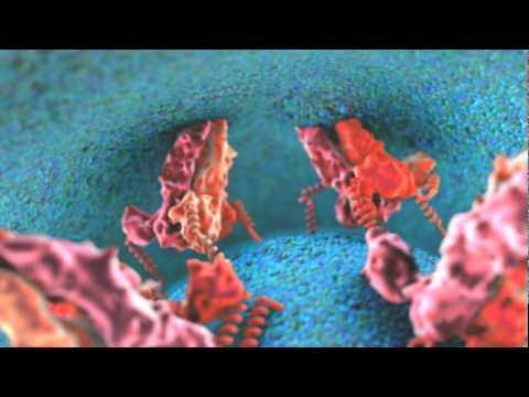 Dengue Viral Fusion