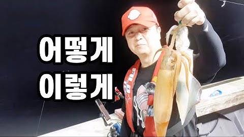 한치낚시 6차전 하모니호 깔끔하게 아이스박스 포장까지 ika metal cuttlefish やりいか