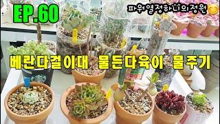 EP.60 베란다걸이대 물든다육이 물주기