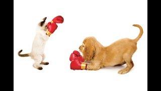 Siêu hài hước chó vs mèo! Funny Cats and Dogs Compilation