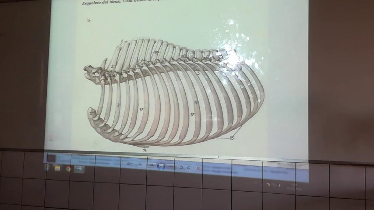 Asombroso Fishbeck Anatomía Comparada Colección - Anatomía de Las ...