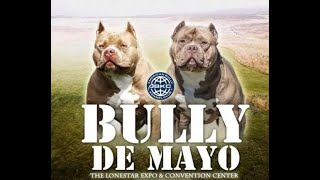 THE AMERICAN BULLY Dog Show | Bully De Mayo | American Bully Show Documentary