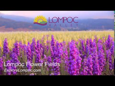 Flower Fields in Lompoc California
