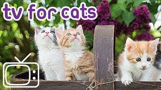 Cat TV: Nature Footage for Cats and Kittens!