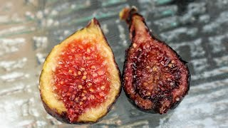 (LONG VERSION) Fig Varieties I'm Looking Forward to Trying in 2021