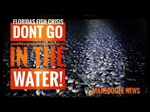 Floridas Water | The worlds Oceans are in big trouble!
