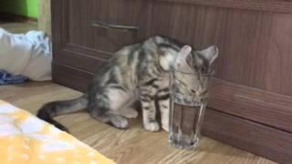 Котёнок пьёт воду из стакана