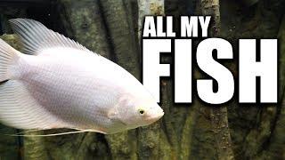 fish-room-tour-the-king-of-diy-aquarium-gallery