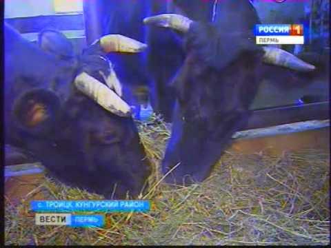 Виртуальная корова принесет настоящее молоко