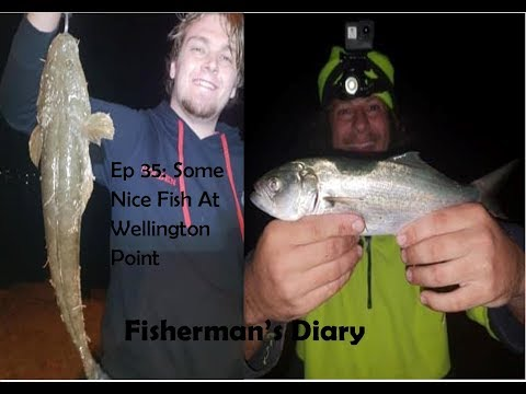 Ep 35: Good Fish At Wellington Point ~ Fisherman's Diary
