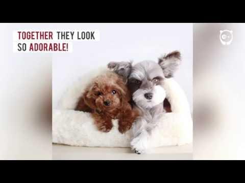 Meet Mir, the supermodel of the dog world