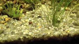 Жёсткая вода - водоросли