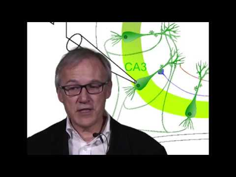 Thierry Amédée in Neurobiology of Aging /Alzheimer et PGE2: des relations enflammées...