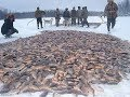 Рыбалка зимой. Лов карася неводом под льдом на диком озере.