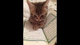 Cats Will Not Walk on The Quran, experiment with 5 cats