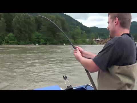 Fishing with Bent Rod- Fraser River Sturgeon Fishing
