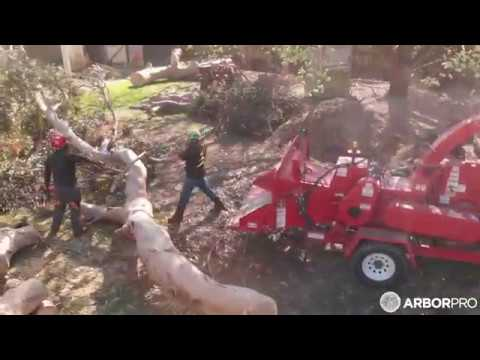 Large tree removal In Christchurch - How to remove a 50ton tree with a crane!