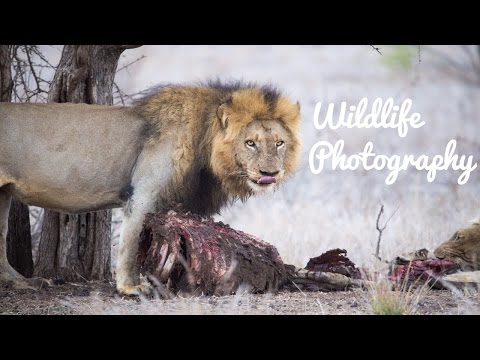 Wildlife Photography: The Day in the Life of a Wildlife Photographer