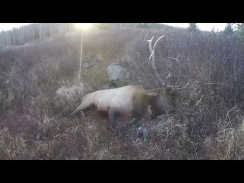 Elk Hunting in Unit 76 Creede Colorado with Long Ridge Outfitters