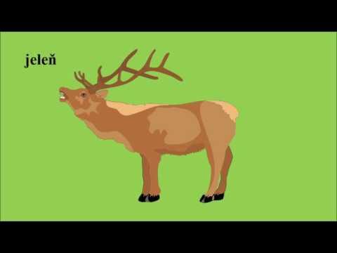 Naucne Videa Pre Deti Videa Pre Deti Lesne Zvieratka Youtube