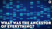 What Was the Ancestor of Everything? (feat. PBS Space Time and It's Okay To Be Smart)