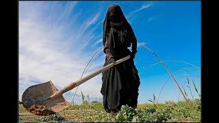 euphrates-iraqi-farms-shut-down-irish-potato-shortage