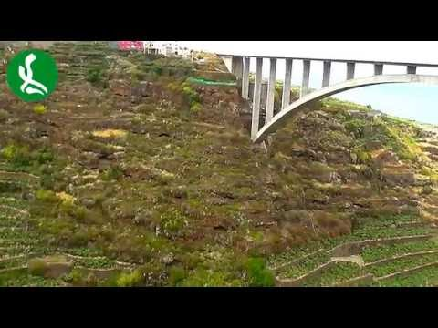 Puente de Los Tilos San Andrés y Sauces - Isla de La Palma