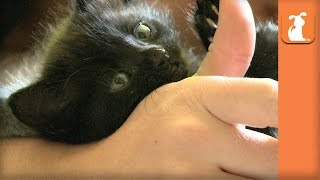 Sweetest Baby Kittens Cuddle My Finger! - Kitten Love