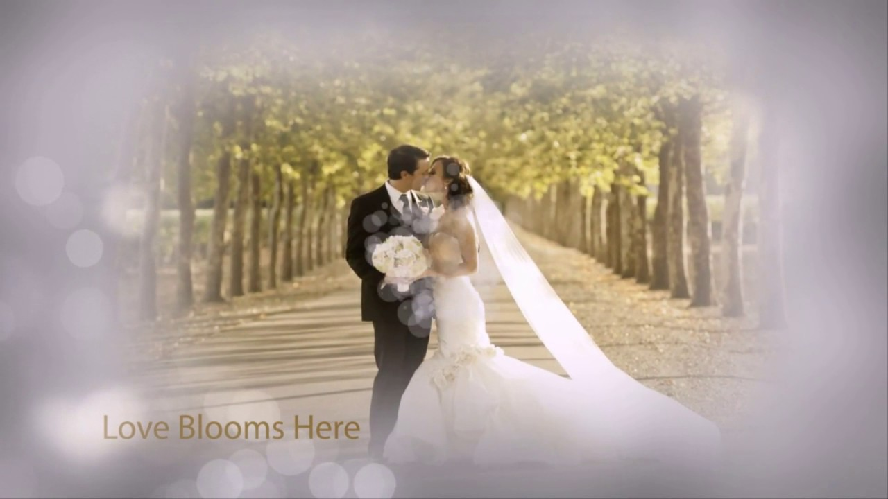 free download after effect template wedding