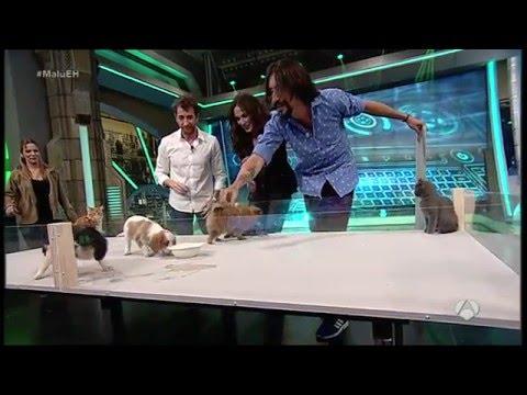 �C�mo reaccionan perros y gatos al verse por primera vez - El Hormiguero - Fauna y Acci�n
