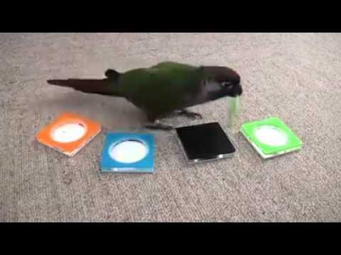 Der Schlaue Vogel