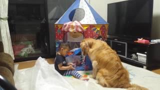 3歳のゴールデンの女の子と2歳の坊やです。 いつも坊やが遊ぶ時は側で...