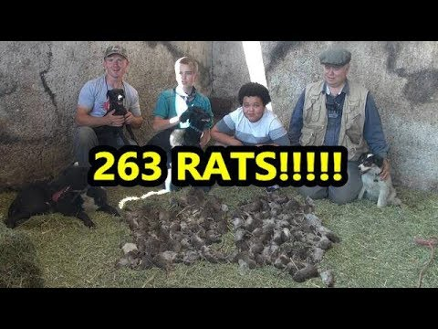 ERATication! RECORD BREAKING Pest Control Job With Dogs!