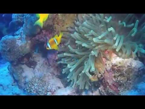 Mar Rojo Corto